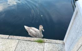 Lovere - Porto turistico #3 - Lago Iseo