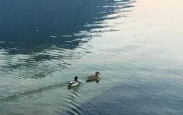 Lovere - Porto turistico #4 - Lago Iseo